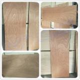 Plywood  - Fordaq Online market - Sapelli / Poplar Core Door Size Plywood Panels