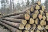 Saw Logs - White Ash Logs AB 30-40 cm