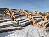 White Birch Logs, grade A, diameter 25+ cm