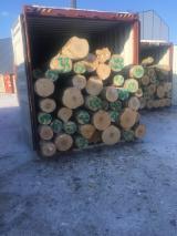 Laubrundholz  - 18+ cm Birke Furnierholz, Messerfurnierstämme Russland Вологда, Киров Russland zu Verkaufen