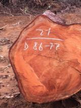 Laubrundholz  Doussie Afzelia, Lingue, Apa, Chanfuta - Schnittholzstämme, Azobé , Doussie , Izombé