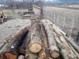 Cherry  Hardwood Logs - 30+ cm Cherry Saw Logs Romania