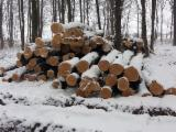 Saw Logs - -- cm Cherry Saw Logs Romania
