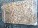 Veneer and Panels - Offer for Camphor Burl Veneer for Hotel Decoration 0.5 mm