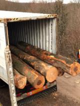 null - Beech Logs, Buche
