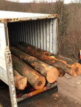 Forest And Logs Germany - Beech Saw Logs 30+ cm