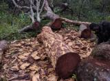 Forest And Logs Africa - Iroko / Mahogany / Teak Square Logs 20-25 cm
