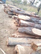 Bossen En Stammen Afrika - Square Logs, Afrikaans Palissander, Machibi, Copal Van Rhodesië