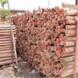 Acacia Logs 30 cm