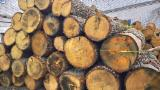 Hardwood  Logs Oak - A/B/C Oak Saw Logs 24+ cm