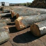 Greece Hardwood Logs - Oak Saw Logs 40-80 cm