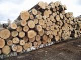 Industrial Logs - Pine / Spruce Industrial Logs 6-60 cm