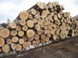 Grumes De Trituration à vendre - Vend Grumes De Trituration Pin  - Bois Rouge, Epicéa  - Bois Blancs Russia