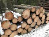 Softwood  Logs Spruce Picea Abies - Spruce Saw Logs 18+ cm