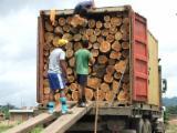 Păduri Şi Buşteni America De Nord - Vand Bustean De Gater Teak
