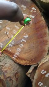 France Hardwood Logs - Azobé Peeling Logs, 80-110+ cm