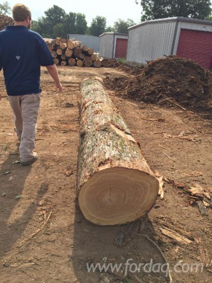 Black-Walnut--Red-Oak--White-Oak-saw-logs