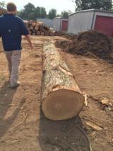 锯材级原木, 黑胡桃木, 红橡木, 白橡木