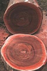 Fordaq wood market - Selling Azobe, Dibetou, Padouk from Gabon
