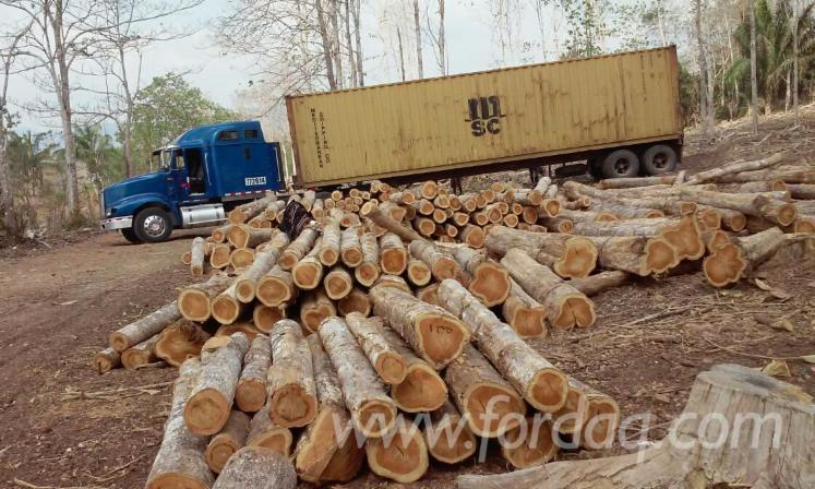 Sales-of-320-ha-of-12-Years-Teak-Plantations