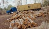 Bosques Y Troncos América Del Sur - Venta Bosques Teak Panamá Darién Region