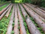 Wälder Und Rundholz Zu Verkaufen - Lärchenrundholz in guter Qualität , feinjähriger Jahringaufbau