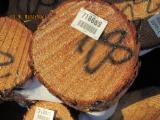 软木:原木 轉讓 - 锯材级原木, 南方黄松