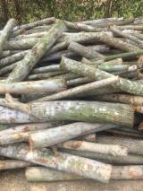 Brandhout - Resthout Brandhout Houtblokken Niet Gekloofd - Eucalyptus Brandhout/Houtblokken Niet Gekloofd