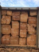 Hardwood Logs Suppliers and Buyers - Doussie Squares Logs