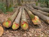 France Hardwood Logs - Oak Saw Logs, 25-39 cm
