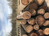 Hardwood  Logs For Sale - Black Walnut Saw Logs, ABC, diameter 25+ cm