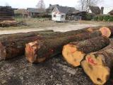 Hardwood  Logs - Oak Veneer Logs, Top Quality, diameter 60+ cm