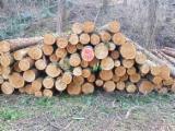 软木:原木 轉讓 - 锯材级原木, 西方红雪松