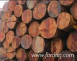 Softwood Logs Suppliers and Buyers - Douglas Fir Saw Logs, Diameter 30-60 cm