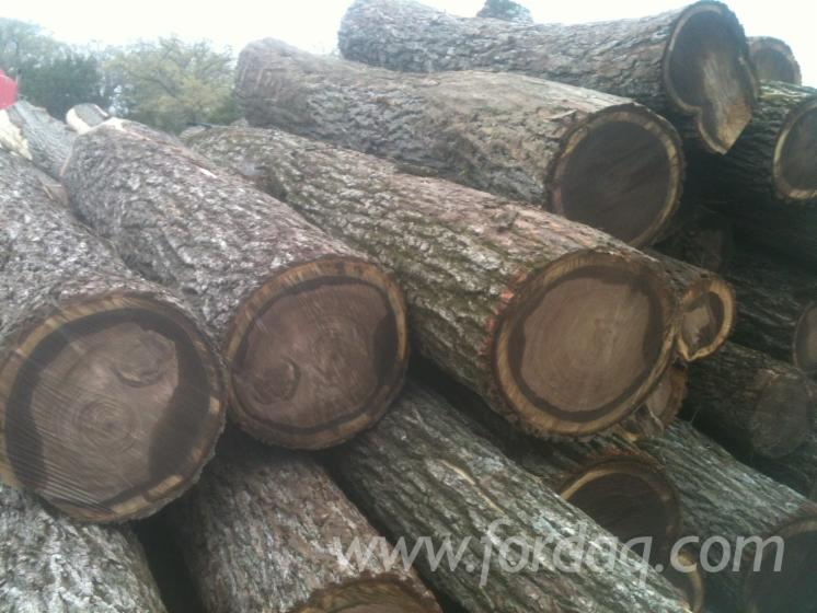 Fresh-Cut-Black-Walnut-Saw-Logs