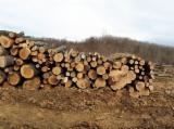 Hornbeam Hardwood Logs - -- mm Hornbeam, Beech, Oak Firewood Romania