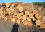 Ukraine Hardwood Logs - White Oak Logs, diameter 20+ cm