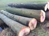Ukraine Hardwood Logs - Grade ABC White/Red Oak Logs