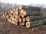 Ukraine Hardwood Logs - Quality A/B/C Oak Logs