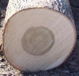Ukraine Hardwood Logs - Grade ABC Poplar Logs, diameter 20+ cm