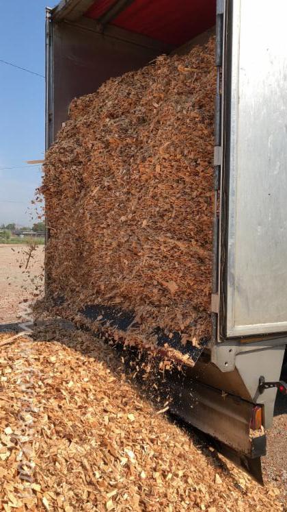Comprar-Lascas-De-Madeira-Da-Floresta-Pinus---Sequ%C3%B3ia-Vermelha--Abeto---Whitewood