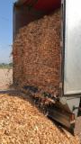 Comprar Lascas De Madeira Da Floresta Pinus - Sequóia Vermelha, Abeto - Whitewood, Abeto Siberiano Polônia
