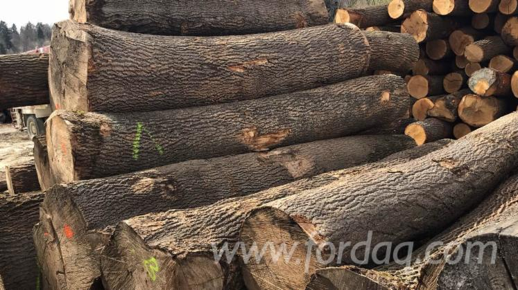 Oak---Ash---Beech---Pine---Spruce-Saw-Logs