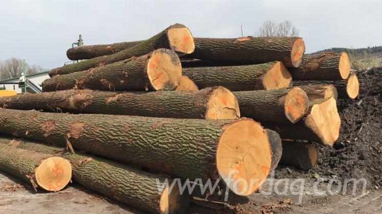 Oak--Ash--Beech-Saw-Logs