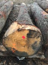 Offers Serbia - Oak Saw Logs, 40 cm