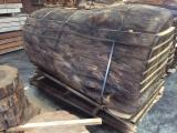 Greece - Fordaq Online market - European Chestnut , Walnut , Spruce