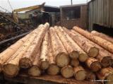 Nigeria Hardwood Logs - Doussie Saw Logs from Nigeria, A/B