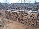 Buy Or Sell  Firewood Woodlogs Cleaved Romania - Beech Firewood/Woodlogs Cleaved -- mm