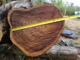 Forest And Logs North America - Central America Hardwoods Ltd.