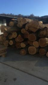 Maple  Hardwood Logs - -- cm Sycamore Maple Saw Logs Romania